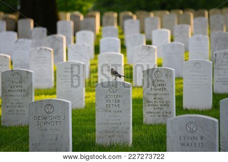 ARLINGTON, USA - MAY 18, 2014: Arlington National Cemetery with a flag next to each headstone during Memorial day - Washington DC United States