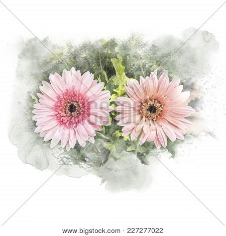 Illustration Of Blossom Gerbera Artistic Floral Abstract Background. Watercolor Painting (retouch).
