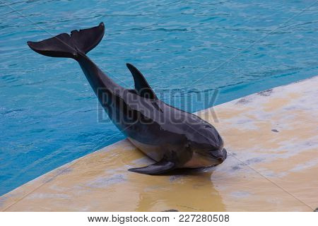 Photo Of A Dolphin Posing In The Pool
