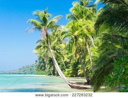 Exotic Paradise Beautiful Beach
