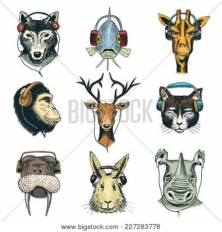 Animal Head In Headphones Vector Animalistic Character In Earphones Or Headset Listening To Music Il