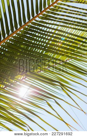 Close up of fresh green palm tree leaves
