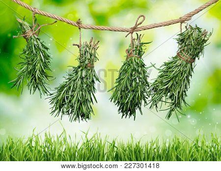 Fresh Herb Herbs Hanging Green White Background