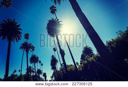 Sun Shining Over Tall Palm Trees In Los Angeles, California
