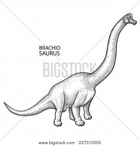 Graphic Brachiosaurus. Vector Dinosaur Isolated On White Background. Herbivore Animal Of The Prehist