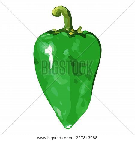 Watercolor Green Sweet Bell Bulgarian Pepper Vegetable Isolated Vector