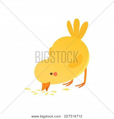 Cute Baby Chicken Pecking Grain, Funny Cartoon Bird Character Vector Illustration Isolated On A Whit