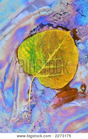 Aspen Leaf And Plant Oils