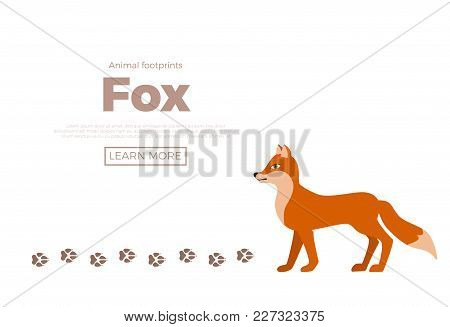 Forest Animals With Foot Prints Cartoon Style Colorful Vector Illustration. Collection Of Wild Natur