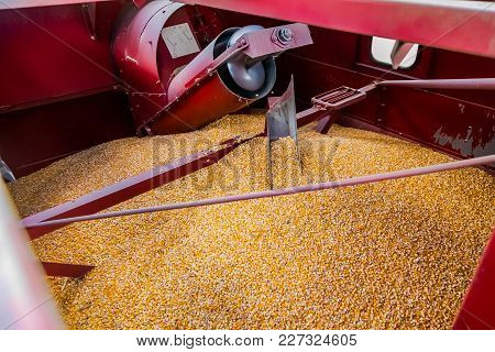 Harvesting Corn With Machinery, Commercial Maize Farming