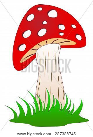 Mushroom, Toadstool Or Fly Agaric Standing In Grass As Cartoon And Vector On A White Isolated Backgr