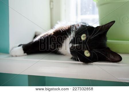 Black And White Cat With Eyes Open Is Lying On The Windowsill And Looking At Camera.