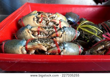 Fresh Crabs Are Tied In A Red Pickup In The Market. Fresh And Delicious.the Big Claws Of A Crabs. Cr