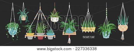 Collection Of Macrame Hangers For Potted Plants. Set Of Hanging Planters Made Of Rope, Elegant Handm