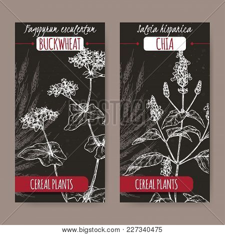 Set Of Two Labels With Fagopyrum Esculentum Aka Buckwheat And Salvia Hispanica Aka Chia Sketch On Bl