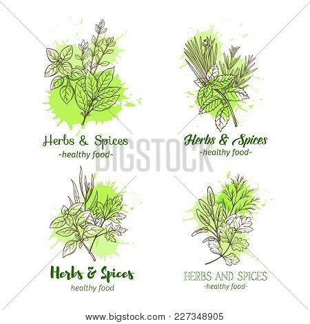 Banner Template With Hand Drawn Sketch Herbs And Spices For Farmers Market Menu Design. Vector Illus
