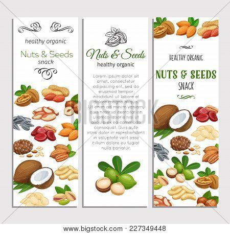 Banner Template With Nuts And Seeds. Cola Nut, Pumpkin Seed, Peanut And Sunflower Seeds. Pistachio,