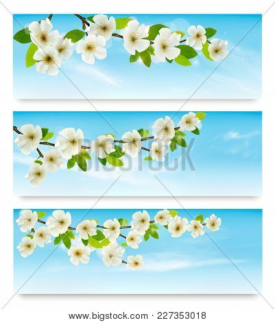 Three Nature Banners With Blossoming Tree Brunch And Blue Sky. Vector Illustration.