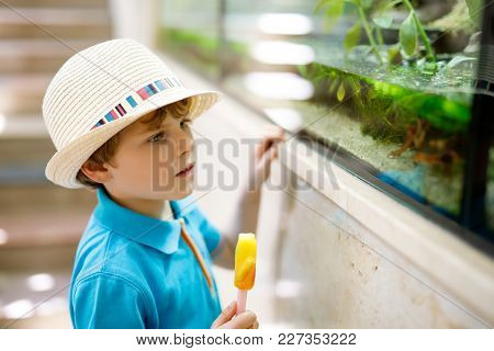 Little Kid Boy Admire Different Reptiles And Fishes In Aquarium Through The Glass In Zoo. Happy Scho