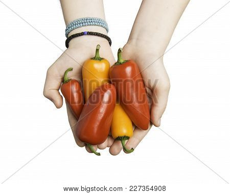 Close Up Of Child Hands Holding Mini Peppers Isolated On White With Clipping Path At All Sizes.