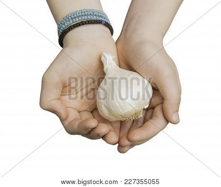 Close Up Of Child Hands Holding A Bulb Of Garlic Isolated On White With Clipping Path At All Sizes.