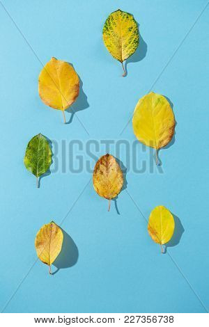 Yellow Leaves With Quince On A Blue Background