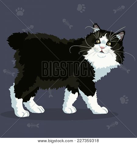Beautiful Bobtail With Black And White Fur And Green Eyes. Vector Illustration.