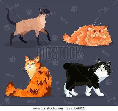 Different  Cats Set With Different Colored Fur And Markings, Standing Sitting Or Walking. Vector Ill