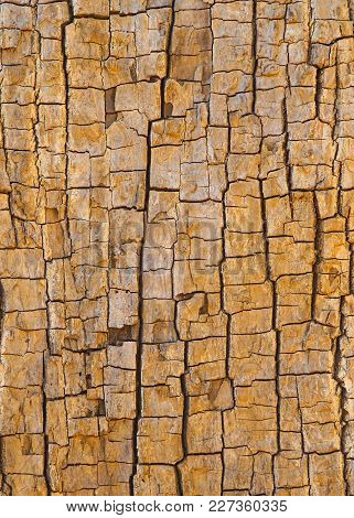 Tree Trunk With Cracked Bark Background Photograph. Dry, Brown And Yellowed Tree Trunk Bark Is Crack