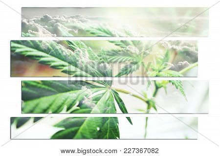 Marijuana Leaf Art With Clouds High Quality Stock Photo