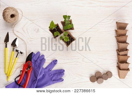 Gardening tools, peat tablets and pots and young seedlings on a wooden background. Concept of spring gardening. Top view with copy space.