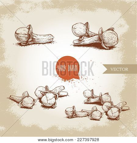 Hand Drawn Sketch Style Cloves Set. Herbs, Spices And Condiment Collection. Vector Illustrations.