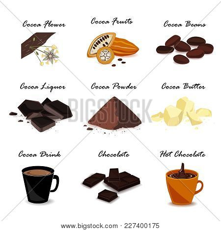 Super Food Cocoa Collection. Pod, Beans, Cocoa Butter, Cocoa Liquor, Chocolate, Cocoa Drink And Powd