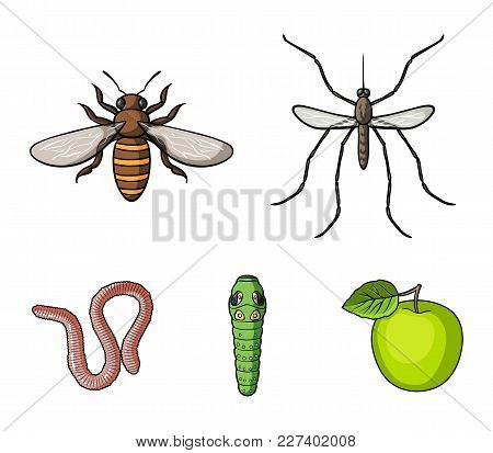 Worm, Centipede, Wasp, Bee, Hornet .insects Set Collection Icons In Cartoon Style Vector Symbol Stoc