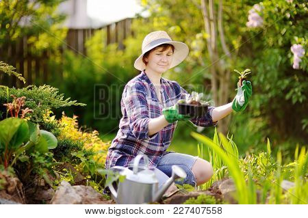 Portrait Of Smiling Beautiful Mature Female Gardener. Woman Planting Seedlings In Bed In The Domesti