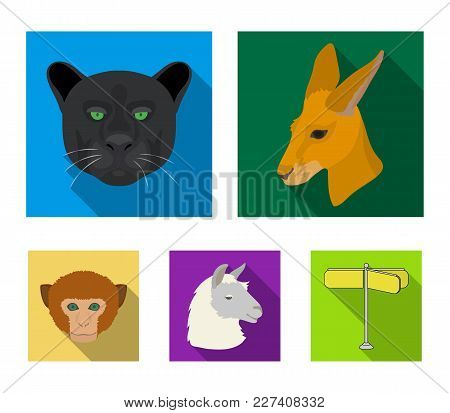 Kangaroos, Llama, Monkey, Panther, Realistic Animals Set Collection Icons In Flat Style Vector Symbo