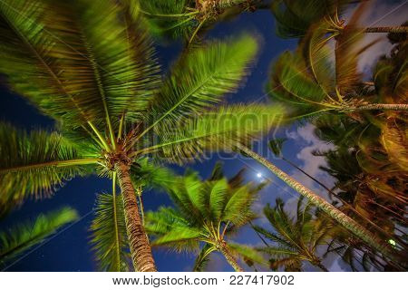 Palm Tree Against Night Sky And Stars