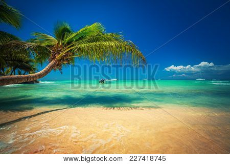 Palmtree And Tropical Beach. Exotic Island Saona In Caribbean Sea, Dominican Republic
