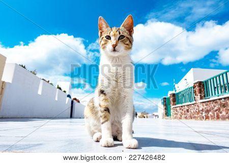cat in sun city in Oia Santorini