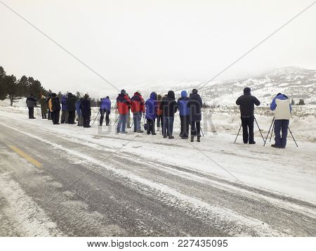 Photographersand Tourists  In Lamar Valley, Yellowstone National Park In Winter