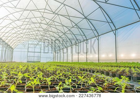 Rows Of Potted Seedlings In Greenhouse Greenhouse Seedlings.