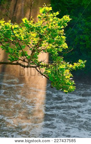 Shafts Of Evening Sunlight Illuminate Mist And A Tree Branch Over A Raging River