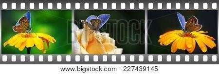 Beautiful blue butterflies on flowers in frame in form film.