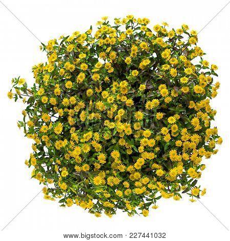 A hanging basket full of creeping yellow zinnia.