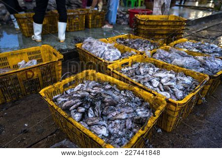 An Giang, Vietnam - Dec 6, 2016: Caught Fishes In Tac Cau Fishing Port At Dawn, Me Kong Delta Provin