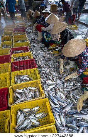 An Giang, Vietnam - Dec 6, 2016: Caught Fishes With Vietnamese Women Working At Tac Cau Fishing Port