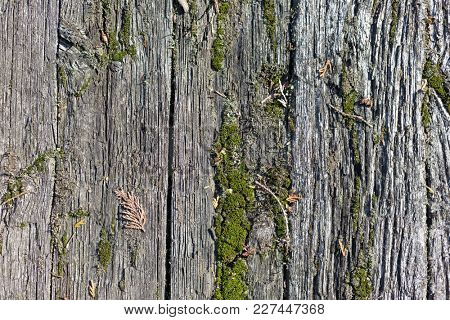 Old mossy wooden boards background