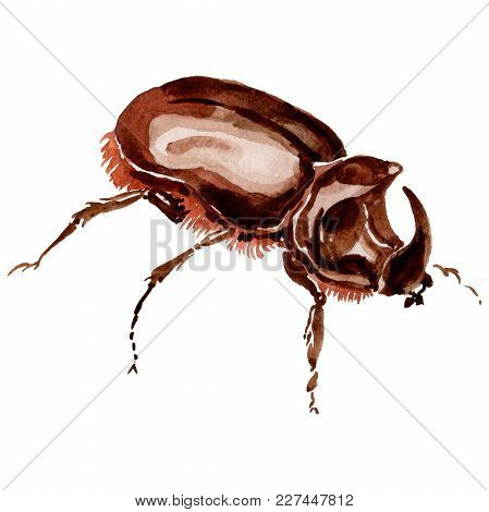 Exotic Beetles Wild Insect In A Watercolor Style Isolated. Full Name Of The Insect: Rhinoceros Beetl