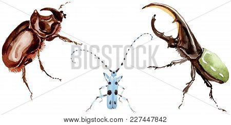 Exotic Beetles Wild Insect In A Watercolor Style Isolated. Full Name Of The Insect: Herkules-beetle,