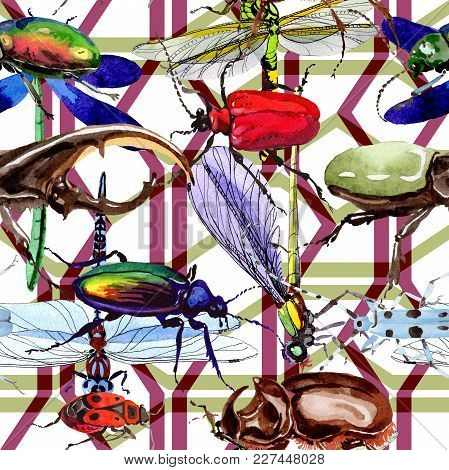 Exotic Beetles Wild Insect Pattern In A Watercolor Style. Full Name Of The Insect: Rare Beetles. Aqu